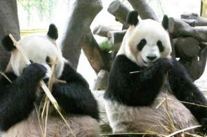 みどりの日 無料開放 動物園