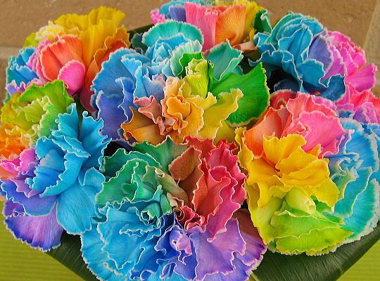 母の日 カーネーション 色 意味 花言葉 違い