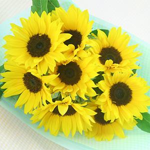 母の日 カーネーション以外の花 おすすめ ひまわり