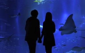 高校生 誕生日デート 水族館 動物園
