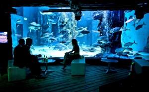 父の日 過ごし方 楽しい 喜ぶ 水族館