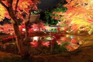 シルバーウィーク 2015 日帰り おすすめスポット 関西 清水寺ライトアップ