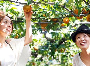シルバーウィーク 2015 過ごし方 おすすめ果物狩り