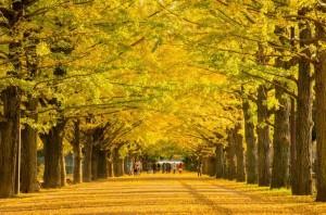 関東の紅葉名所スポットランキング2015!見ごろの時期やドライブコースも 国営昭和記念公園