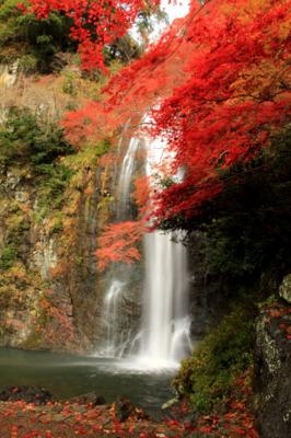 関西の紅葉名所スポットランキング2015!ライトアップや見ごろの時期は? 箕面大滝