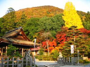 関西の紅葉名所スポットランキング2015!ライトアップや見ごろの時期は? 出雲大神宮