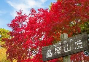 関東の紅葉名所スポットランキング2015!見ごろの時期やドライブコースも 高尾山