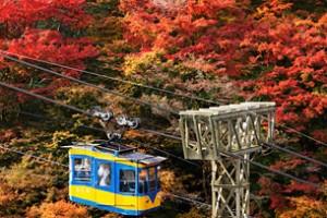 関西の紅葉名所スポットランキング2015!ライトアップや見ごろの時期は? 吉野山