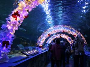 クリスマス デート プラン おすすめ 2015 水族館イルミネーション