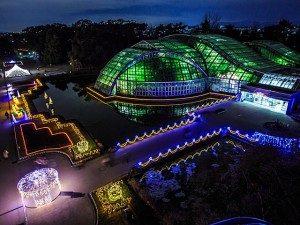 クリスマス デート おすすめ スポット 京都 植物園